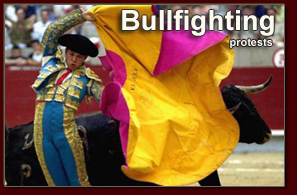 Bullfighting Protests